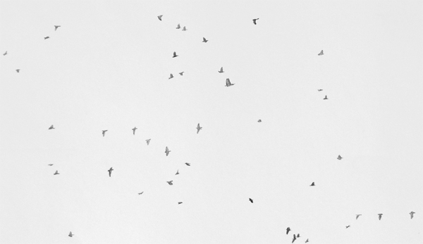 Detail Birding in Point