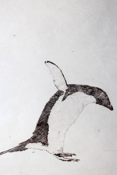 Ping Pong Penguins Close Up