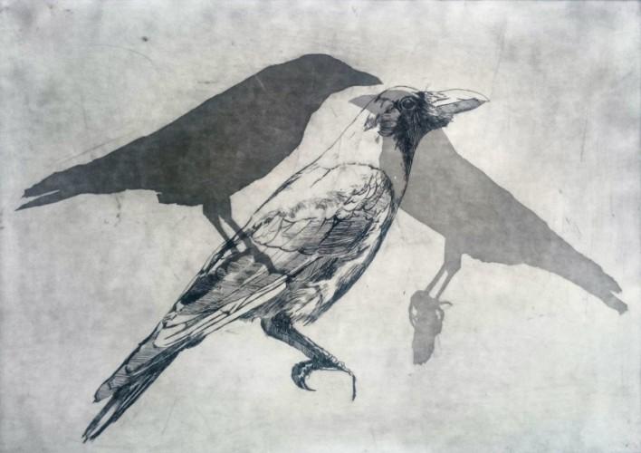 Birds in Grey