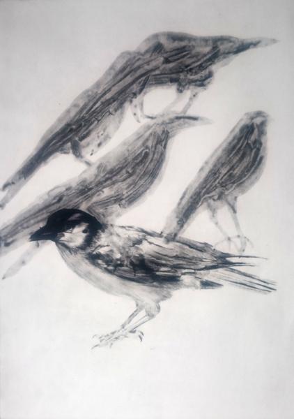 Bird Shades