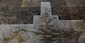 Kelp Tree. Vertical Growth. Hardiness Zoning