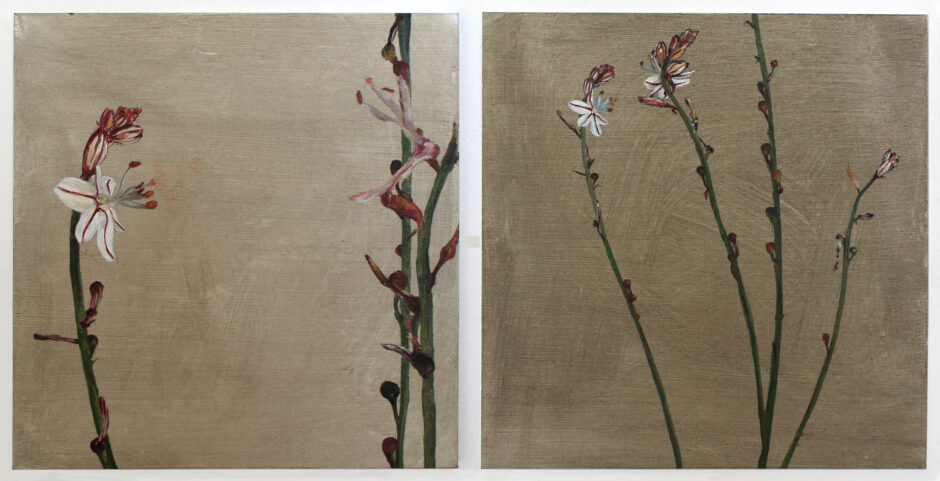 Repetition. Study of a Pink Asphodel